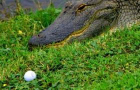 <!--:es-->Bola de golf en Juego<!--:-->